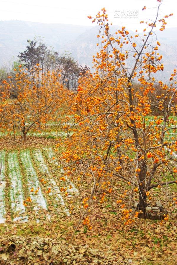 作品名称:秋天的田野 拍摄地点:秦州区西十里; 秋天的田野; 秋天的