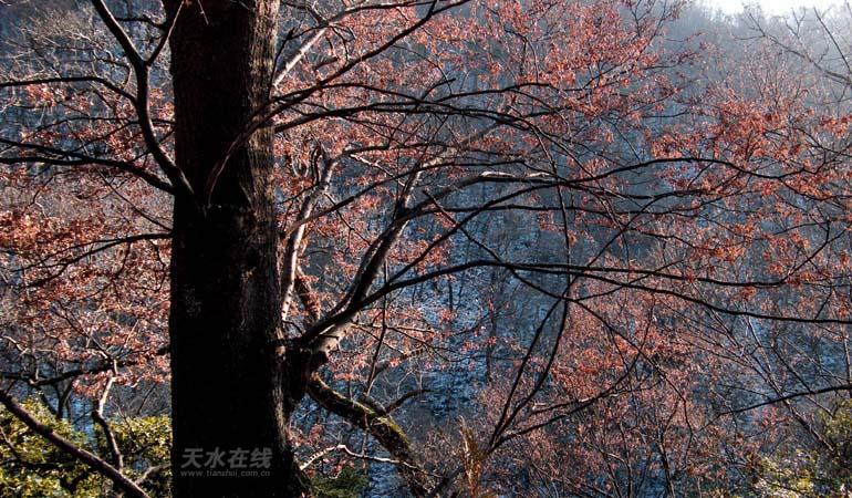 拍摄地点:秦州区太阳山森林公园