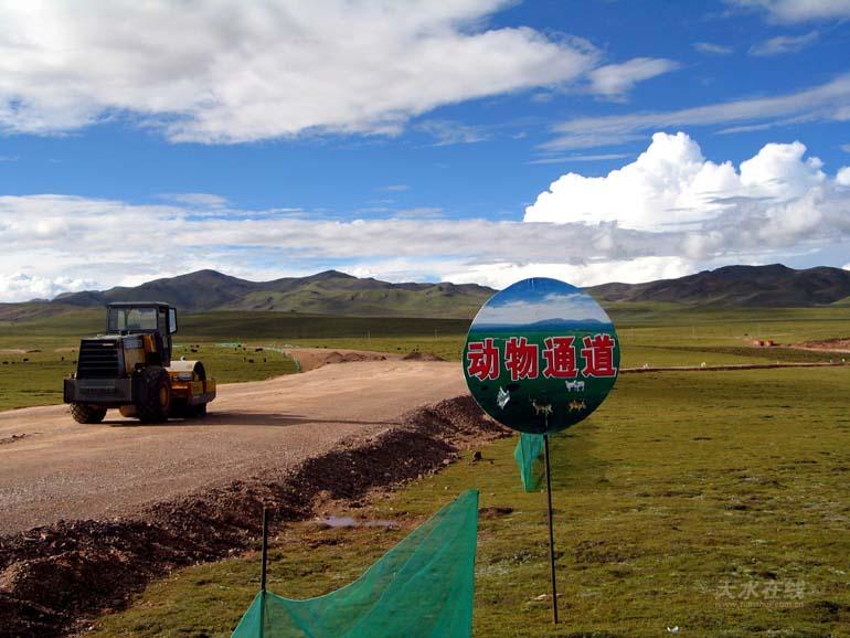中铁十八局集团环保志愿者在青藏高原为了动物迁徙设
