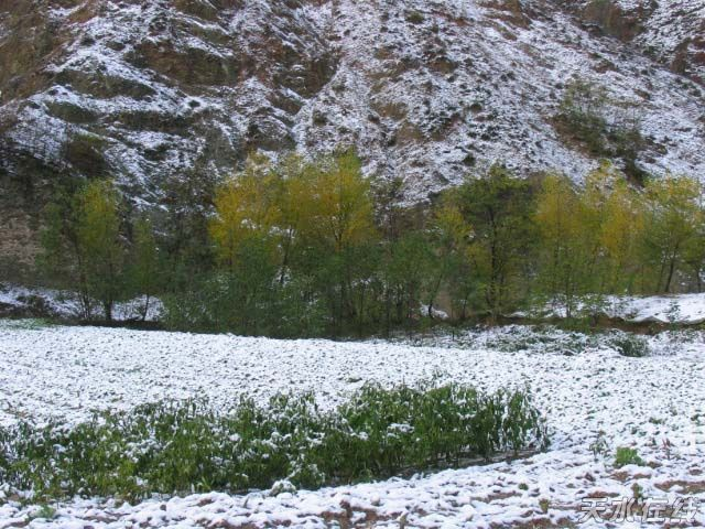 2008的第一场雪_甘谷:2008年的第一场雪