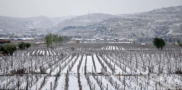天水遭受雨雪霜冻灾害 农作物受灾面积145万亩(图)
