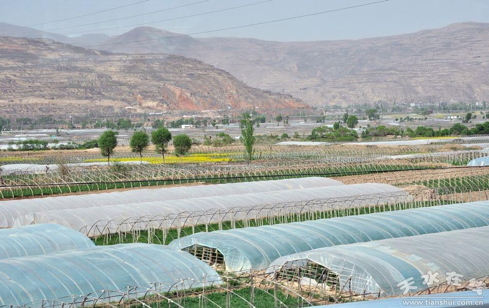 甘肃天水武山新闻_【甘肃日报】全省蔬菜生产现场会在武山县召开(图)--天水在线