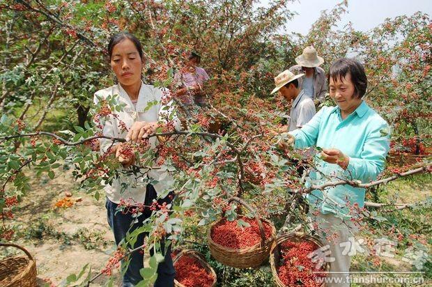 狠抓果树栽培管理新技术的推广应用,使全县果园施肥,修剪,喷药,涂白