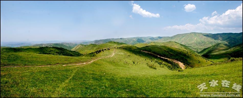 天水在线2013年第十三号行动:走进张家川平安牧场(图)