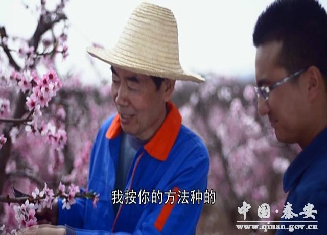 秦安县首部微电影 人面桃花相映红 新鲜出炉