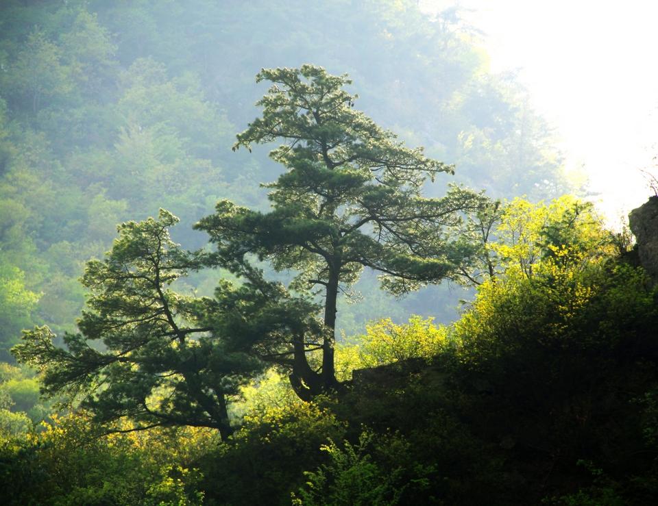 老君山森林公园(组图)图片