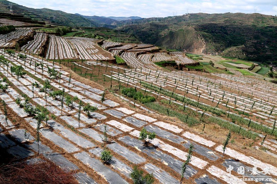安县2014年高效节水灌溉项目即将完工