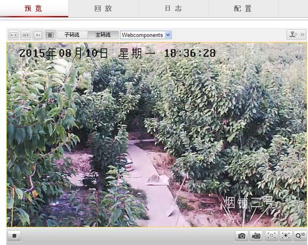 樱桃树夏剪注意要点:-互联网 烟铺大樱桃 现场直播剪树图片
