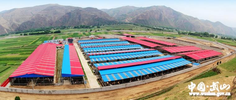 """武山县""""六个带动""""促进畜牧业快速发展(图)"""