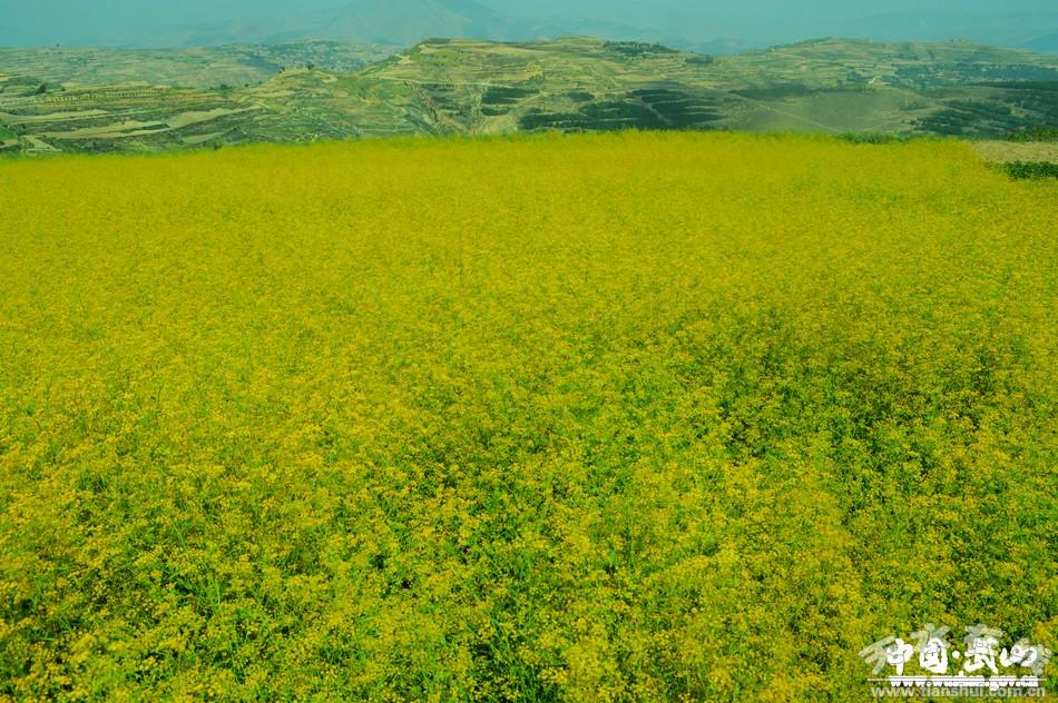 【脱贫攻坚】武山:加快发展现代农业 增强农村发展活力(图)