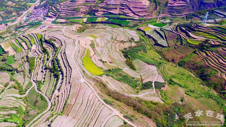 天水航拍在线秦州区华岐镇油用基地种植类型(设备牡丹nvr图片