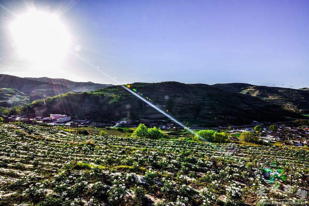天水航拍在线秦州区华岐镇油用牡丹种植基地(rgb投光灯泛光图片