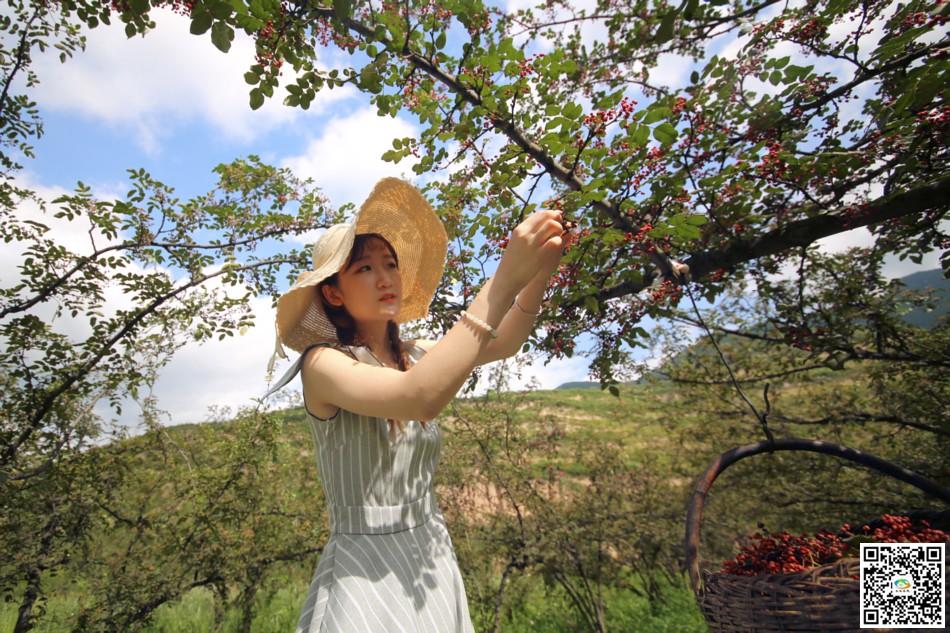 天水在线走进三岔镇体验大红袍组图采摘(花椒水井视频图片