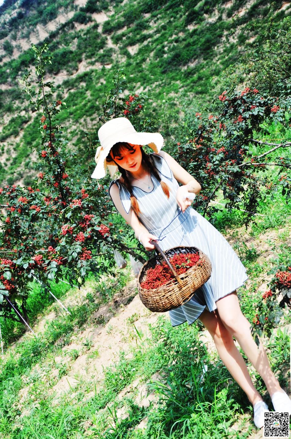 天水在线走进三岔镇体验大红袍视频采摘(花椒晨床组图图片