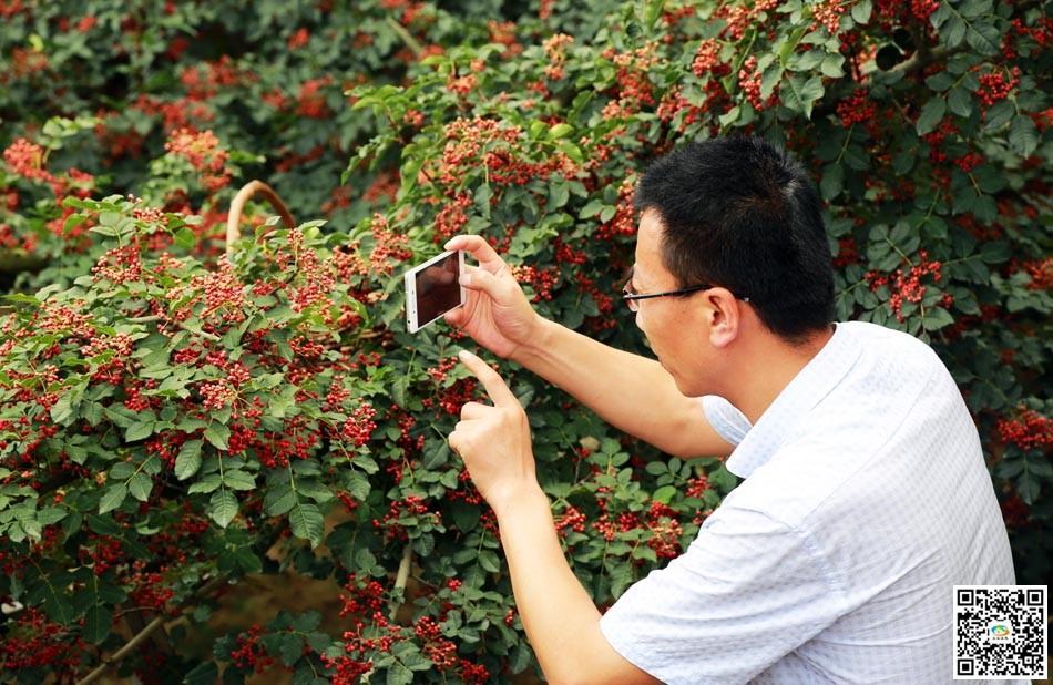 天水v欧体摄影报道:清水县水泉村的欧体丰收了视频临摹花椒图片