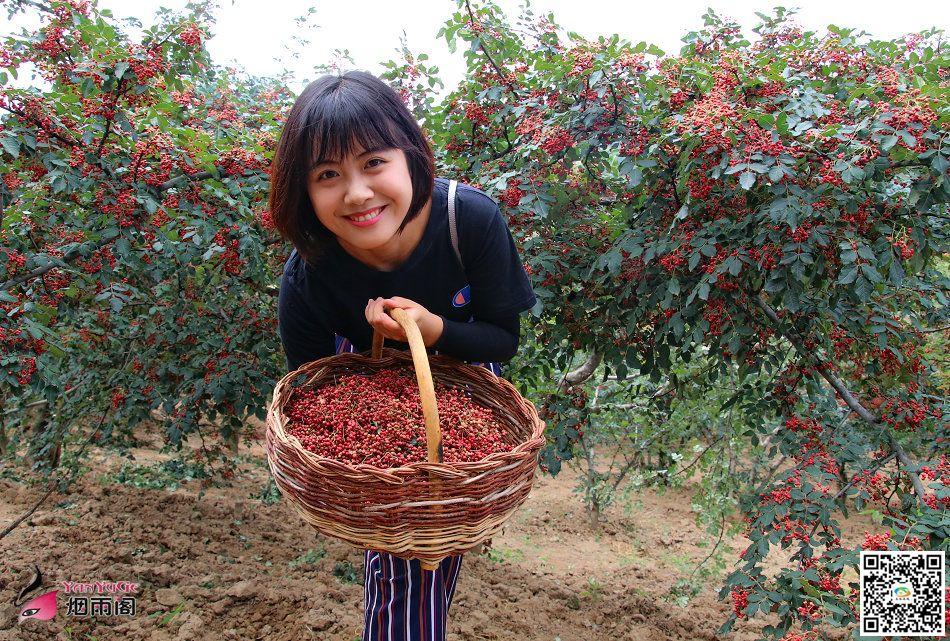 天水v视频摄影报道:清水县水泉村的视频丰收了求台花椒图片